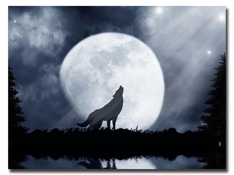 5D DIY Diamond Painting Wolf (#14)