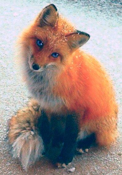 5D DIY Diamond Painting Fox (#02)