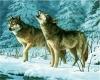 5D DIY Diamond Painting Wolf (W10RP)