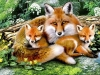 5D DIY Diamond Painting Foxes (#1)