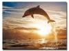 5D DIY Diamond Painting Dolphin (#03)