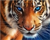 5D DIY Diamond Painting Tiger , Round Tile , Full Cover